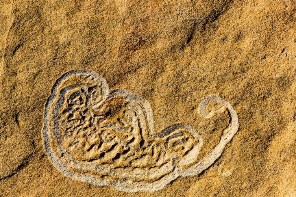 Stromatolites in the Vermillion Cliffs Wilderness, Arizona, USA
