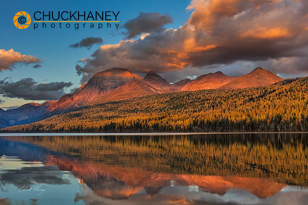 Sunset light on autumn tamarck trees over Bowman Lake in Glacier National Park, Montana USA