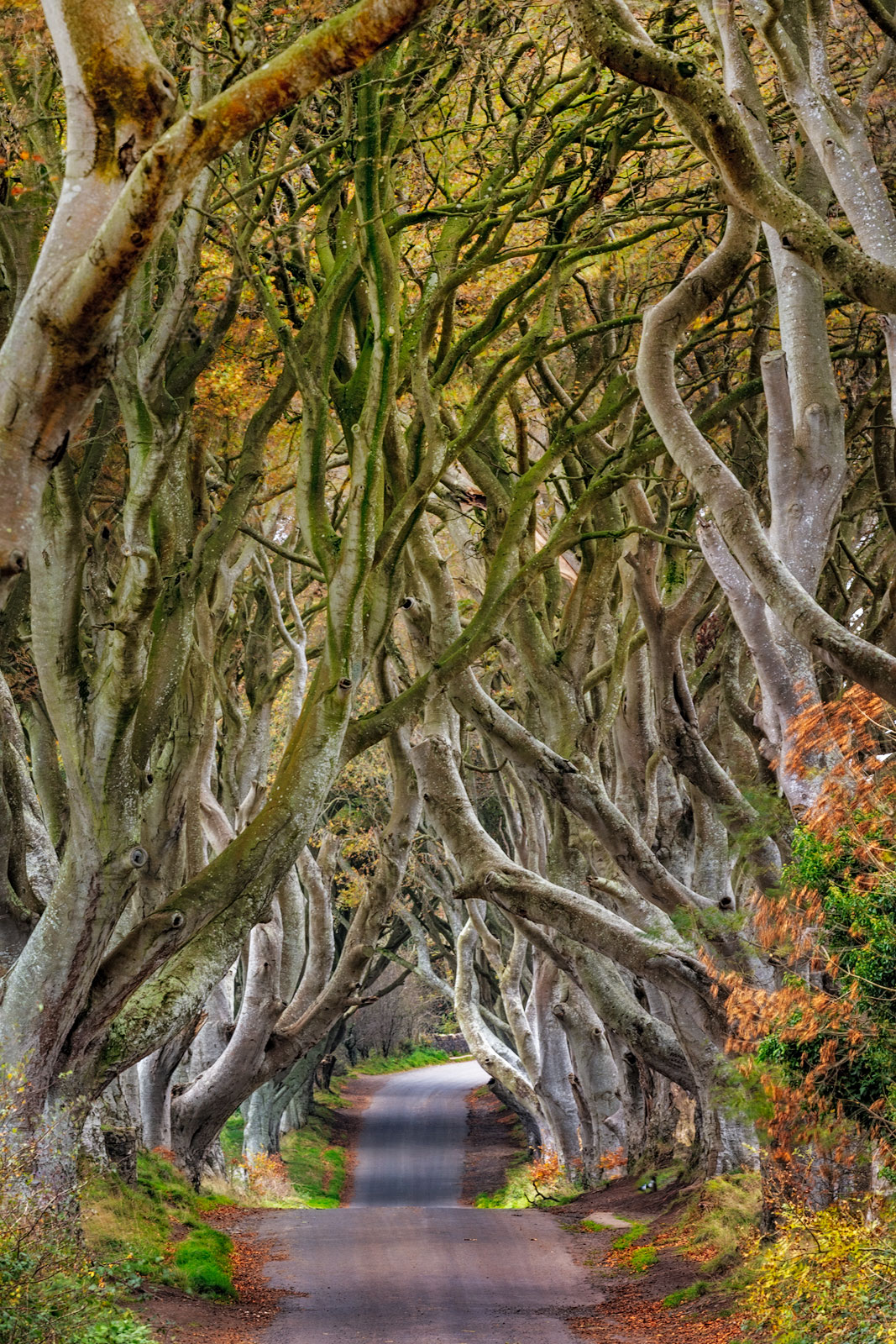 The Dark Hedges in County Antrim, Northern Ireland
