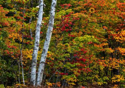 Autumn-Color_014-copy