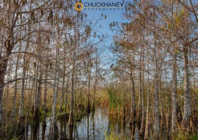 Everglades-NP_017-copy